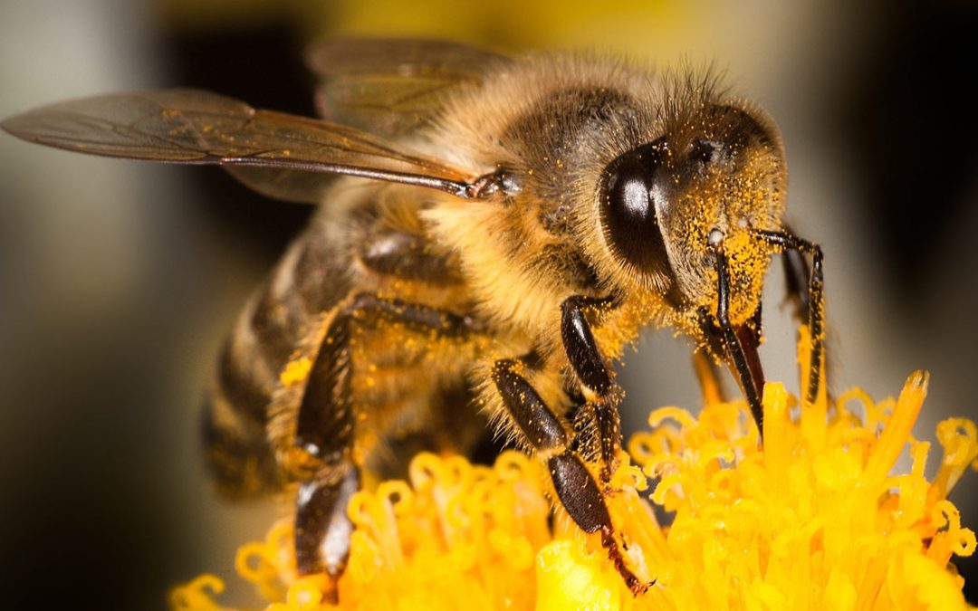 All About Bees – Oct. 28